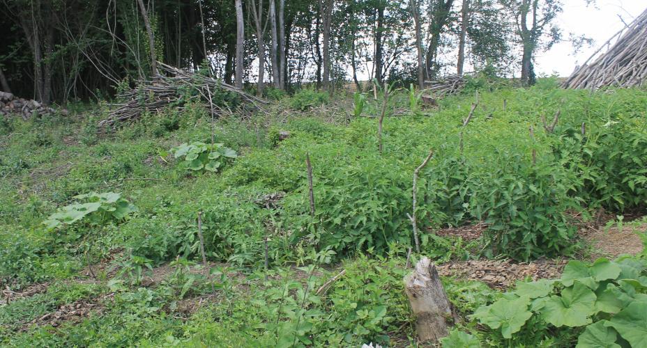 http://tricofolk.free.fr/Divers/jardin/jardin-foret-juillet-2017-01.jpg